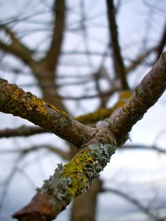 Branch of a baron tree
